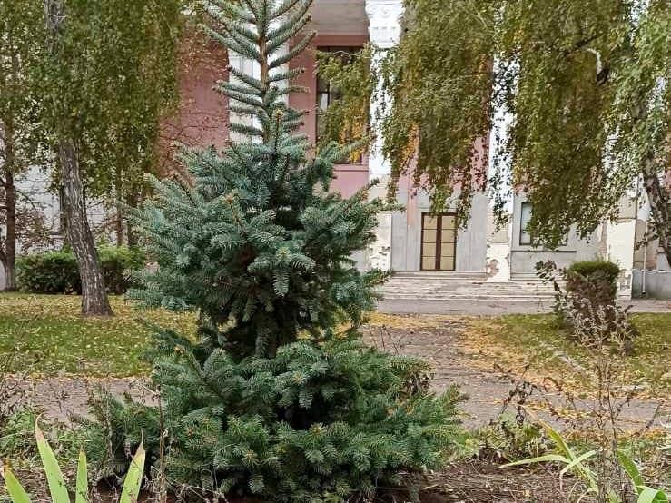 Небайдужі олександрійці висаджували дерева